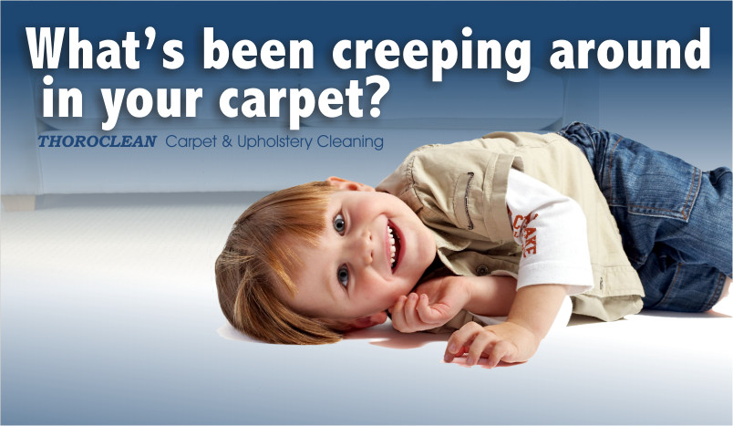 carpet protector, deodorizer, pet odor treatments